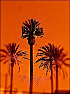 Palm Tree Cell Phone Tower